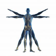SIMED Rehabilitation Medicine, Physiatry, Physical Medicine, PM&R, Sports Medicine,